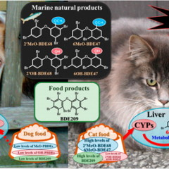 Fish-flavored cat food could contribute to feline hyperthyroidism