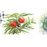 2020 Flavors of Chemistry: Plant Terpenes